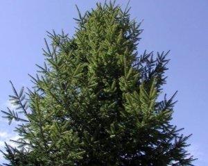 Tree Service Denver Colorado