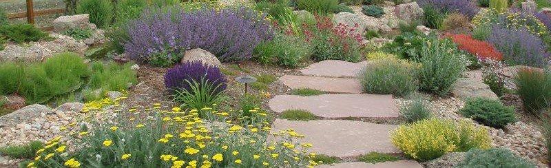 Xeriscape landscaping arvada colorado