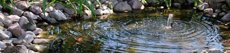 backyard pond Applewood neighborhood
