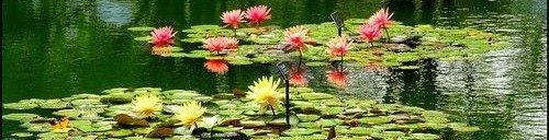 backyard pond Denver Colorado