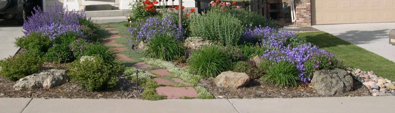 beautiful xeriscaped front yard Littleton