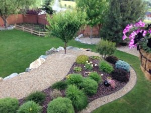 drought tolerant grasses