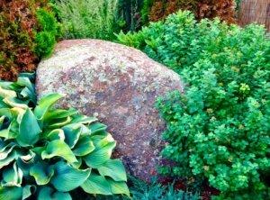 drought tolerant rock garden