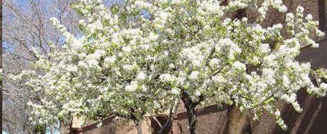 perfect tree for washington park