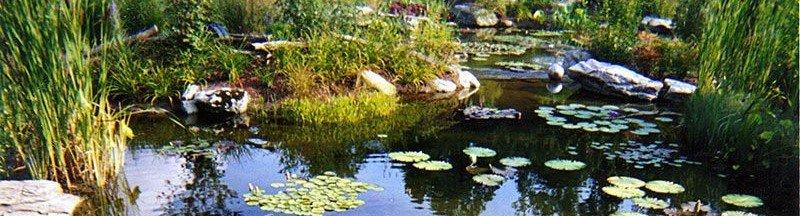 pond for yard in Lakeside neighborhood