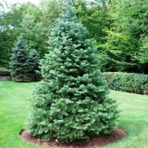 quality tree care Northglenn Colorado