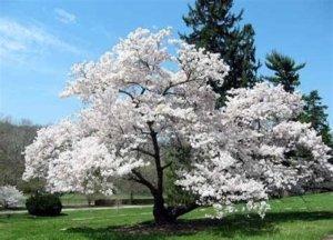 Reasonably price tree services Applewood