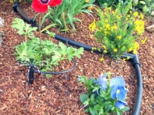 irrigation for high altitude gardening xeriscape drought tolerant plants