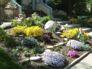 xeriscape saves water University Hills